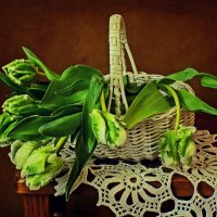 Тюльпаны :: Надежда