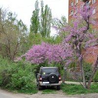 Красиво парканулся :: Антон Бояркеев