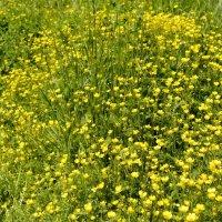 солнечные весенние цветы :: Tatiana Lesnykh Лесных