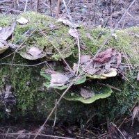 А в апрельском лесу... у... у... у ... :: Ольга Кривых