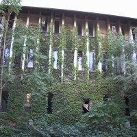 Стена плюща :: Булаткина Светлана