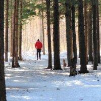 Апрельский лыжник. :: Мила Бовкун