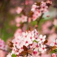 Весна :: Natalia Merkotan