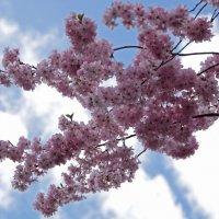 Розовое облако :: Alexander