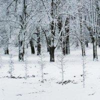 Зима :: Маргарита Батырева