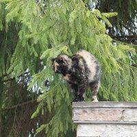 Церковная кошка :: Елена Павлова (Смолова)