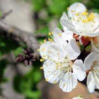 Бледно-розовый дым под лучами апрельского солнца искрится. :: Валентина ツ ღ✿ღ