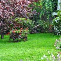В весеннем саду :: Николай Танаев