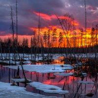 Весенний закат на болоте. :: Фёдор. Лашков
