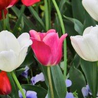 Цветы в апреле 3 :: Валерий Дворников