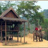 Прогулка на слонах в Лаосе :: Евгений Печенин