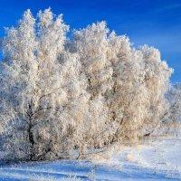 Зимняя сказка :: Владимир Зыбин