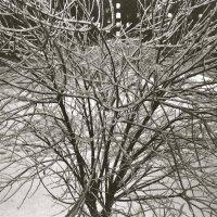 зима 2010 :: Kate Sparrow