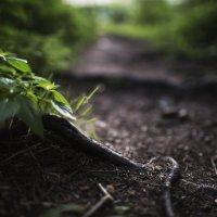 лес :: Алексей Болдырев