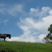 Размышления коня,гуляющего по зеленой траве, на фоне облаков на голубом небе... :: Александр Герасенков