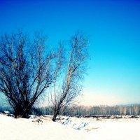Зимняя сказка. :: Оля Игумнова