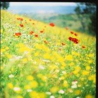 Тоскана цветет :: Евгений Молодцов