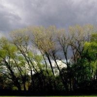 Перед грозой. :: Николай Сидаш