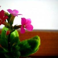 Цветок. :: Оля Игумнова