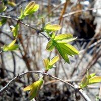 Наступление весны. :: Оля Игумнова