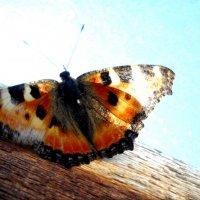 Бабочка. :: Оля Игумнова
