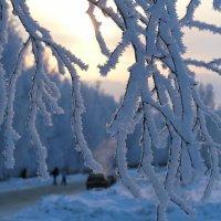 Зимнее утро :: владимир анфилатов