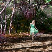в сказочном лесу.. :: Андрей Ширин