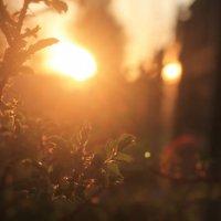 На закате :: Олеся Балакина