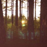 Лес,но без оленей :: Валерия Бухарова