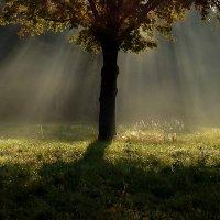 солнечный дождь :: Vasiliy V. Rechevskiy