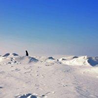 snow desert :: Виктория Зайцева