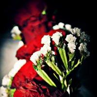 Розы :: Семён Семеняков