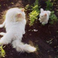 Взгляд двух котЭ :: BeGiNnEr CaMeRiSsSt
