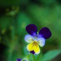 цветочек :: Екатерина Давыдова