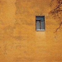 окно в мир :: Vasiliy V. Rechevskiy