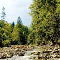 Горная река. :: Николай Сидаш