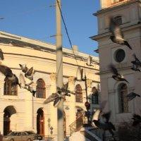 Взлёт голубей :: Alexey Barchan