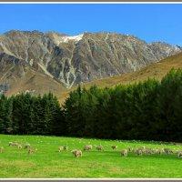 Страна овец и пастбищ :: Евгений Печенин