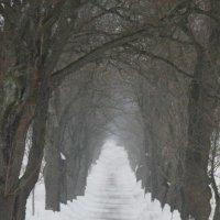 Зимняя алея :: Сергей Мясников
