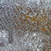 Художница зима :: Сергей Мясников