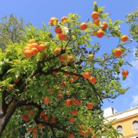 Испания, :: Дмитрий Брицко