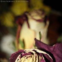 Так увядает красота :: Екатерина Давыдова