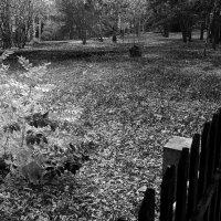 Осень :: Павел Гусев