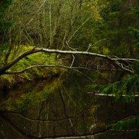 Лес :: Полина Кац