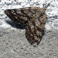 butterfly :: vitali bezushka