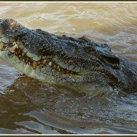 Улыбка крокодила Гены :: Евгений Печенин