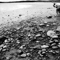 белое море :: Nata Balchyunayte