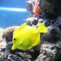 Рыбка :: Мария Барановская