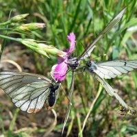 Летние забавы бабочек... :: Лена L.