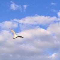 Чайка в небе :: Natalie Т.